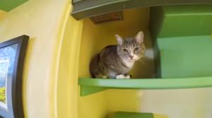 Kovai su graužikais- katė